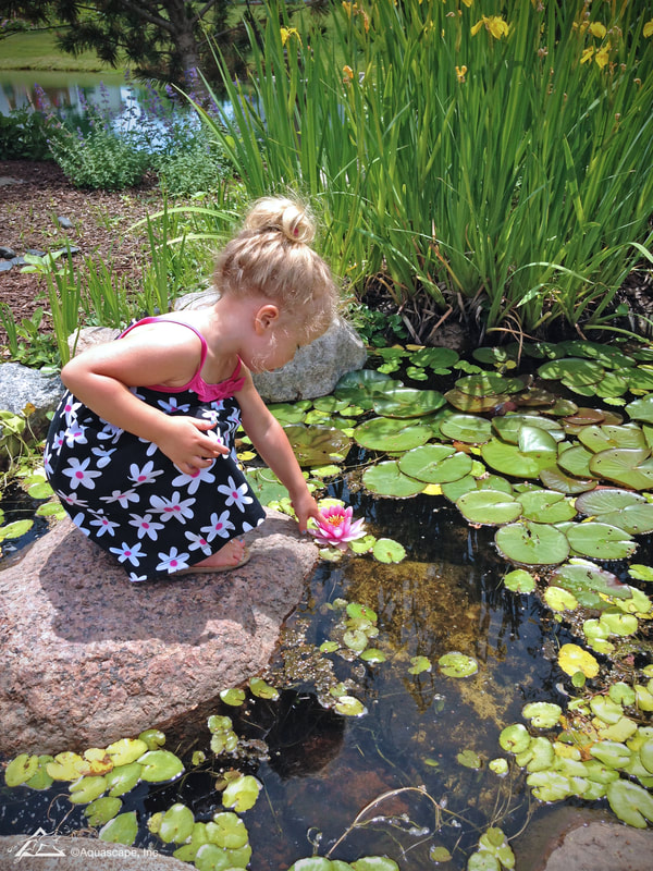 koi pond & Waterfall ideas - Denville nj
