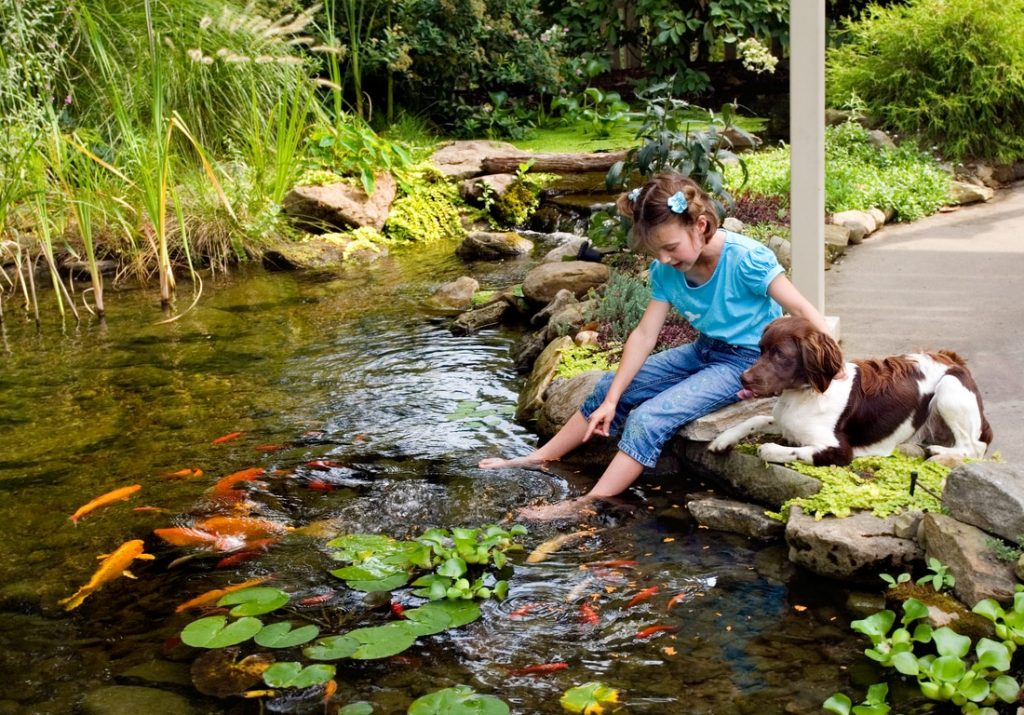 does a koi pond decrease my home value