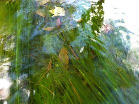string algae in stream